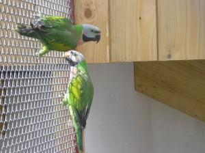 Stranky Nadsencu Pro Exoticke Ptactvo Chovane Druhy Alexandr